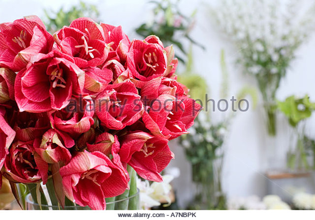 Bunch of red flowers in vase in flower shop close up focus on foreground - Stock Image