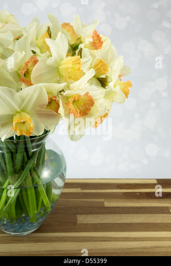 Beautiful spring daffodils in a glass vase - Stock Image