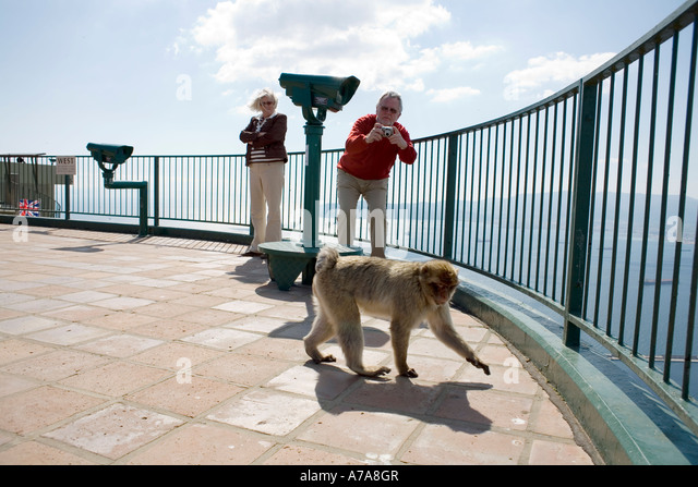 Visitor Photographing Gibraltar Ape - Stock Image