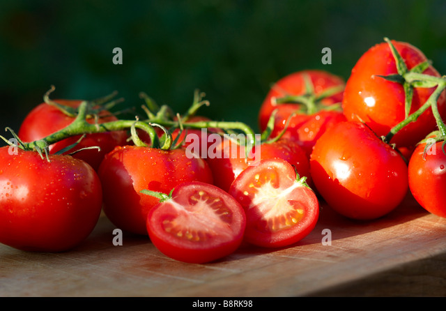 Freshly picked home grown organic vine tomatoes - Stock Image