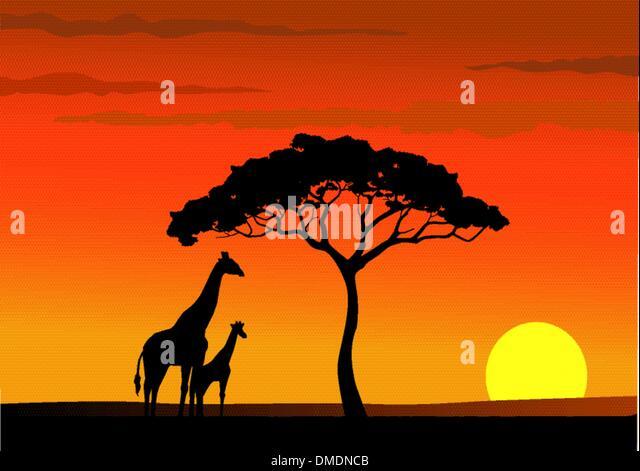 africa sunset - Stock Image