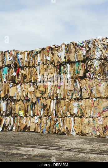 Washington state USA Recycling facility bundles cardboard sorted - Stock Image