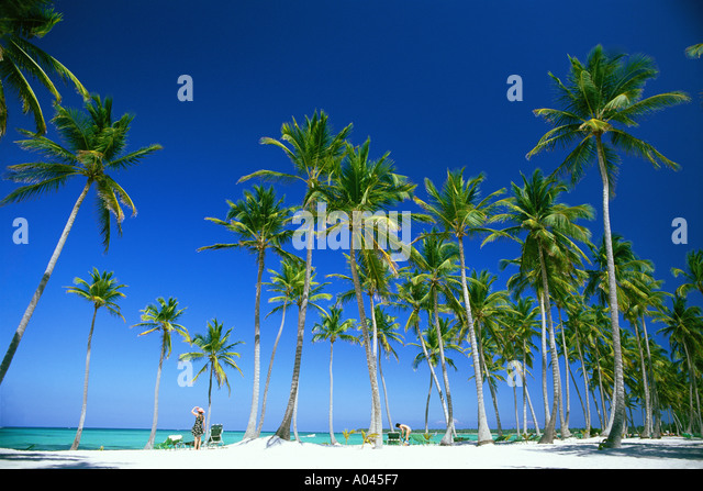Dominican Republic,Bavaro Beach, Punta Cana palm trees and white sandy beach - Stock Image