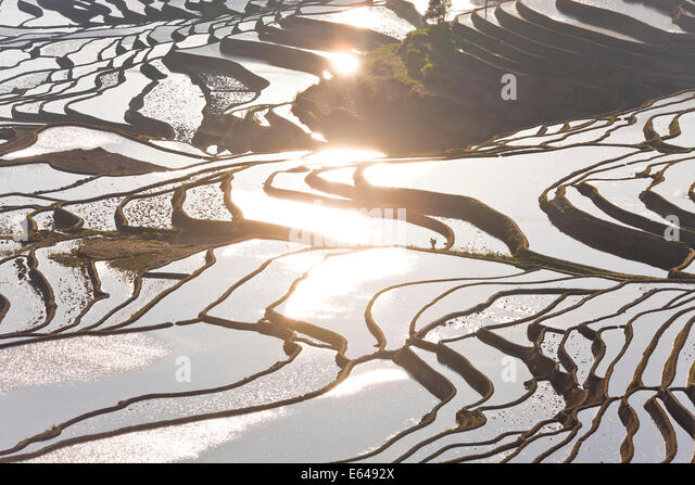 Reflections off water filled rice terraces, Yuanyang County, Honghe, Yunnan Province, China - Stock Image