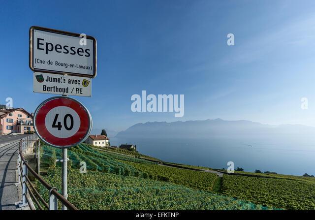 Epesses, Vineyards , Lavaux region, Lake Geneva, Swiss Alps,  Switzerland - Stock Image