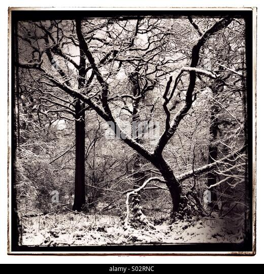 Woodland in the Winter - Stock Image