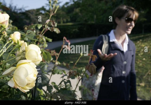 UK, England, Alnwick, The Alnwick Garden, The Rose Garden, Duchess Jane - Stock Image