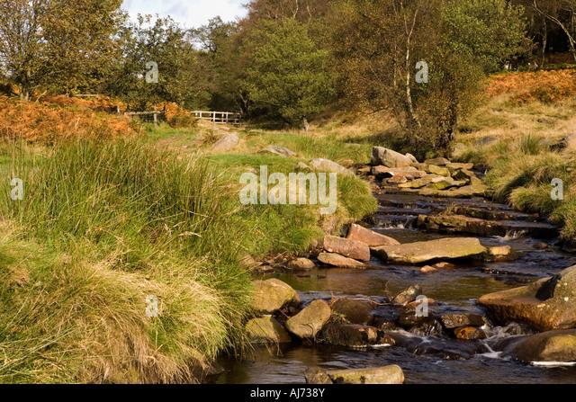Padley Gorge Dog Walk