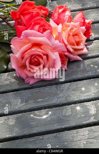 RED AND PINK CUT ROSES ON SLATTED TABLE IN GARDEN - Stock Image