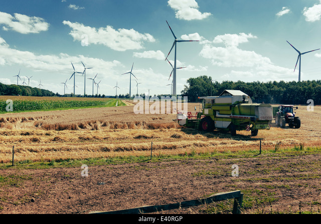Germany, North Rhine-Westphalia, Sassenberg, Harvester in field, wind wheels in background - Stock Image