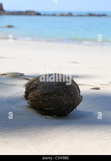 A coconut on the beach Playa Puerto Escondido also known as Playa Cuatro Manuel Antonio National Park Costa Rica - Stock Image