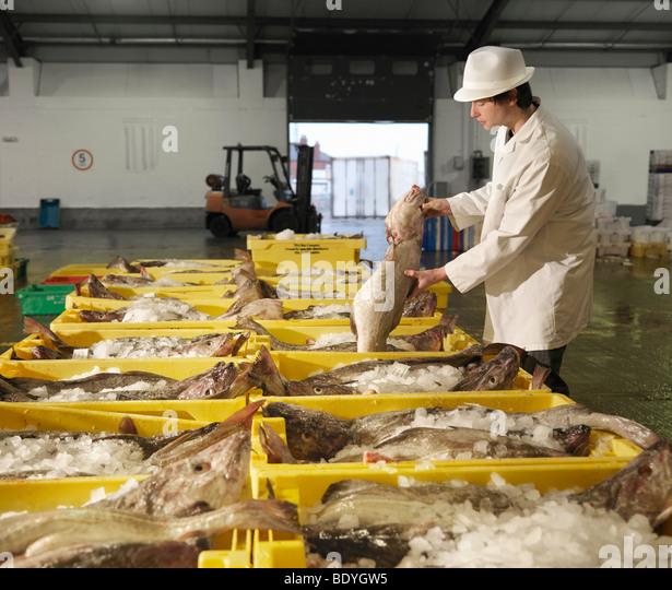Worker Handling Fish In Market - Stock Image
