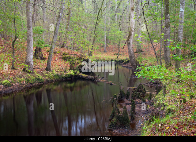 Croatan stock photos croatan stock images alamy for Croatan national forest cabins