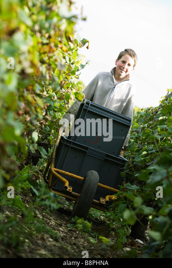 France, Champagne-Ardenne, Aube, boy pushing cart through vineyard - Stock Image