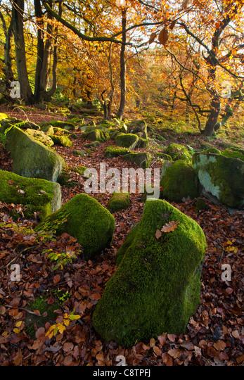 Nature S Path Sussex Address