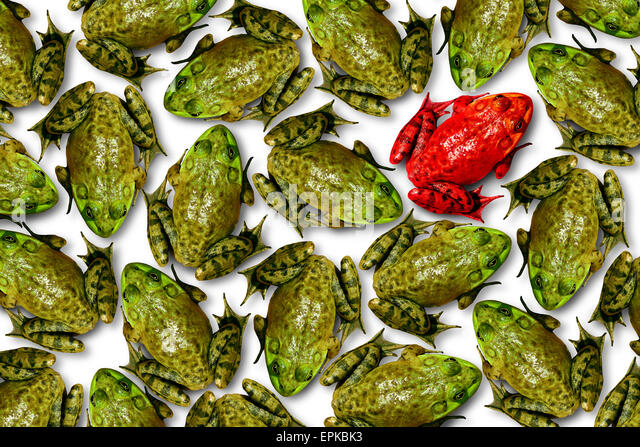 Individuality concept as a group of green frogs with one individual red frog as a business symbol for leadership - Stock Image