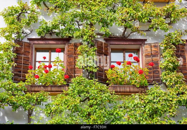 Windows with flowers, Hallstatt, Salzkammergut, Austria - Stock Image