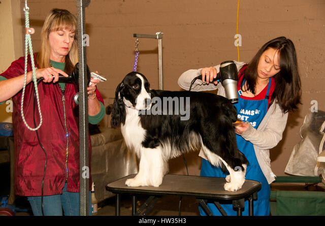 Royal Melbourne Show Dog Grooming