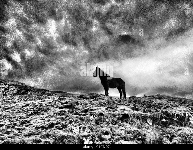 Black horse in rugged landscape with storm clouds - Stock-Bilder