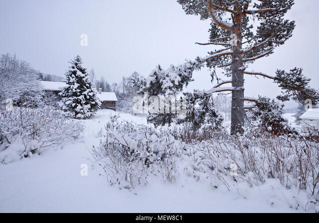 Snow covered log house in a Swedish village - Stock Image
