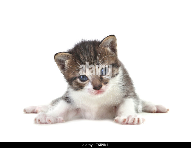 Adorable Cute Kitten on a White Background - Stock Image