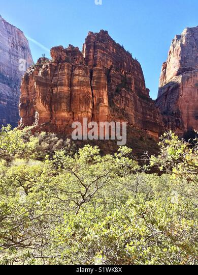 Red rocks of Zion National Park - Stock Image