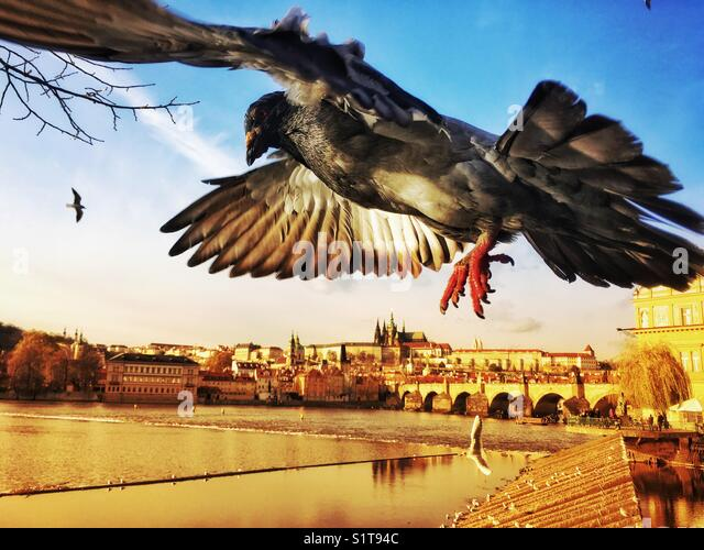 Prague panorama with flying pigeon - Stock Image