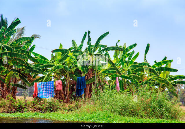 Everyday life in Alleppey, Kerala state, South India - 04/02/2017. - Stock-Bilder
