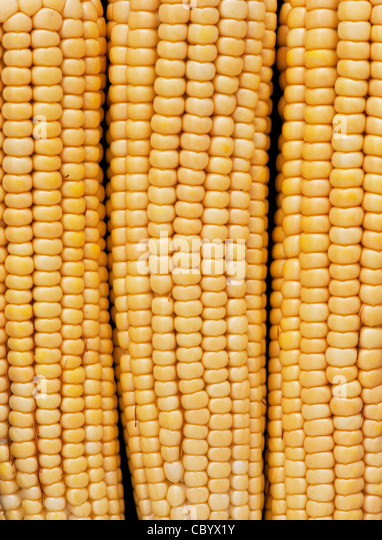 Sweetcorn cob. Corn on the cob. Maize pattern - Stock Image