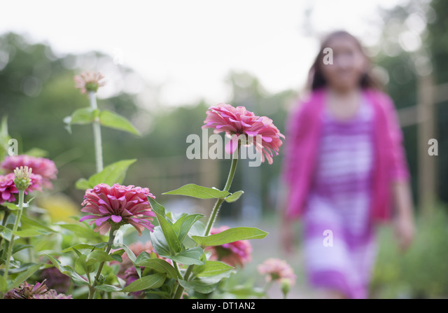 Woodstock New York USA young girl pink dress walking past bed of flowers - Stock-Bilder
