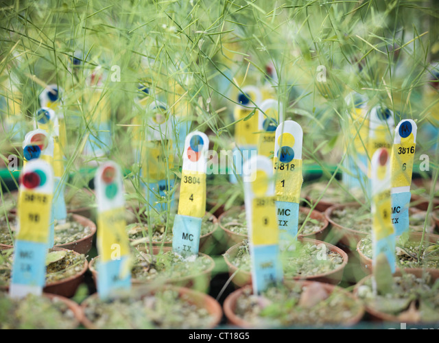 Labels in potted plants in greenhouse - Stock Image
