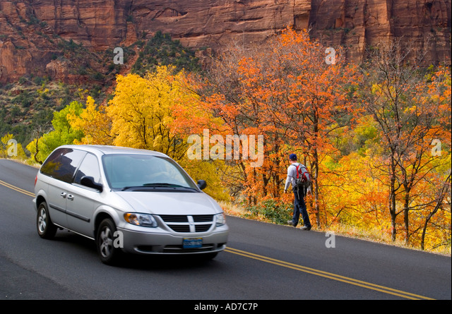 Car Minivan passing Hiker along side of road next to trees in fall Zion Canyon Zion National Park Utah - Stock Image