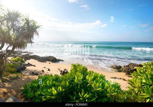 Exotic plants on a sandy beach of indian ocean - Stock Image
