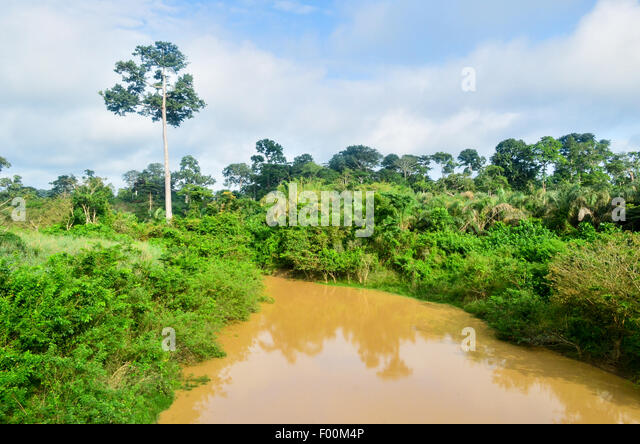 A brownish river in Ghana - Stock Image