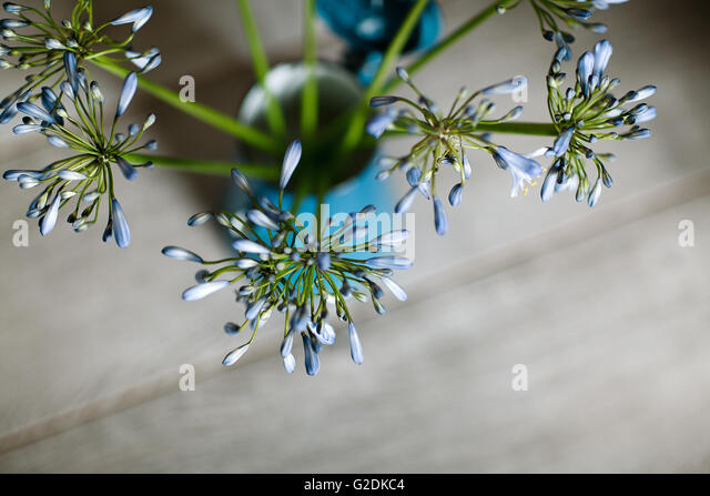 Stilleben mit blauen Zwiebelblüten in Retro - Kaffeekanne - Stock-Bilder