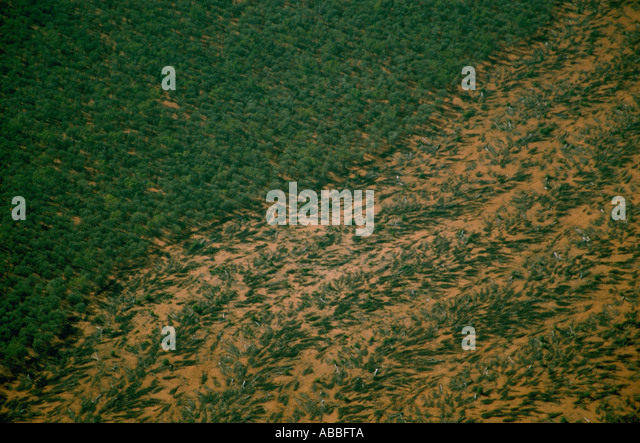 Deforestation in Queensland - Stock Image