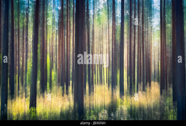 Whispering trees. This effect has been made by swinging the camera. This has been taken by sunny summer day in pine - Stock Image