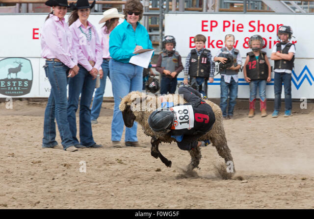 Estes Park, Colorado - Children ages 5-8 ride sheep during the Mutton Bustin' competition at the Rooftop Rodeo. - Stock Image
