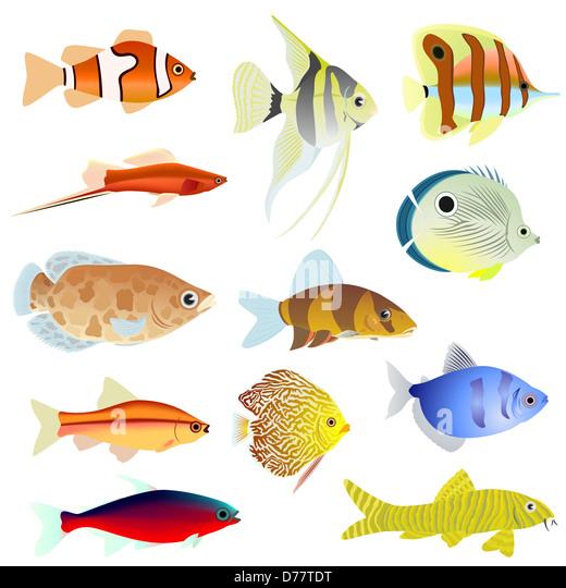 Aquarium home stock photos aquarium home stock images for 94 1 the fish
