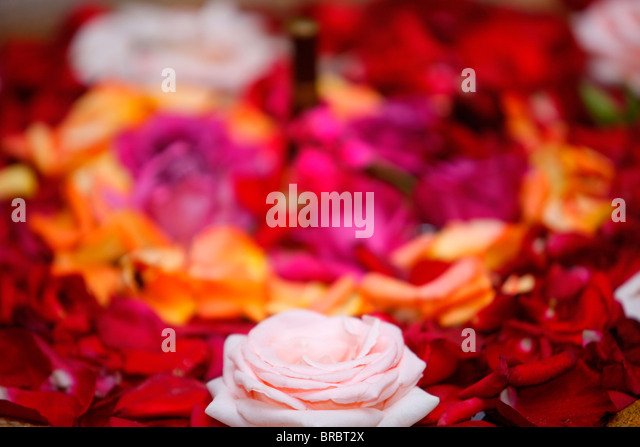 Roses, Essaouira, Morocco, North Africa - Stock Image