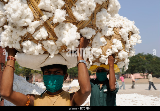 INDIA, Madhya Pradesh, Indore , Mahima ginning factory for fair trade and organic cotton, worker carry raw cotton - Stock-Bilder