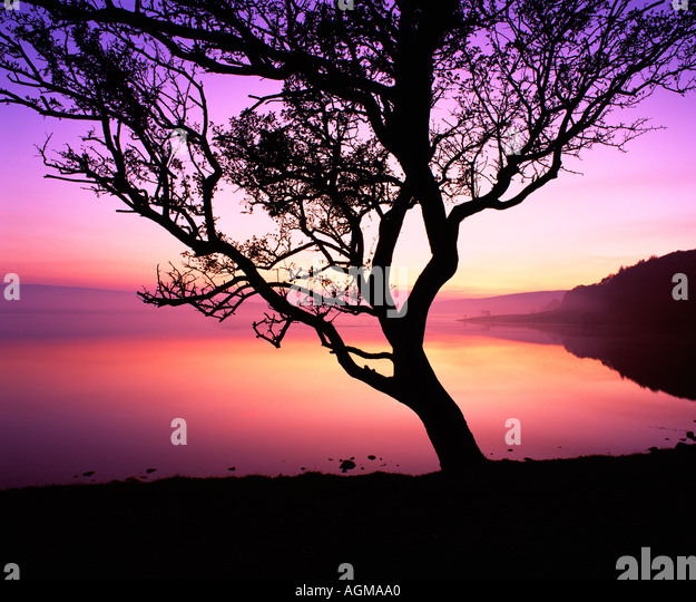 Tree and twilight at Malham Tarn, in the Yorkshire Dales National Park. - Stock-Bilder