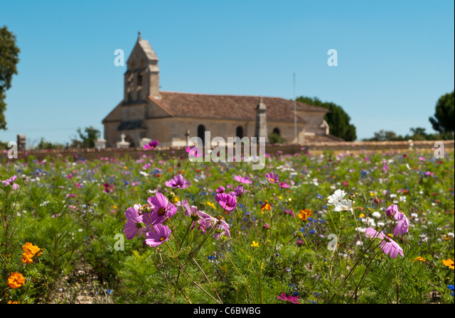Field of wild flowers growing near to Margaux in the Bordeaux region of France - Stock Image