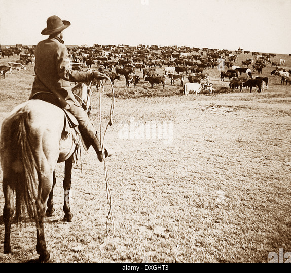 Cattle round-up Sherman Ranch Geneseo Kansas USA early 1900s - Stock Image