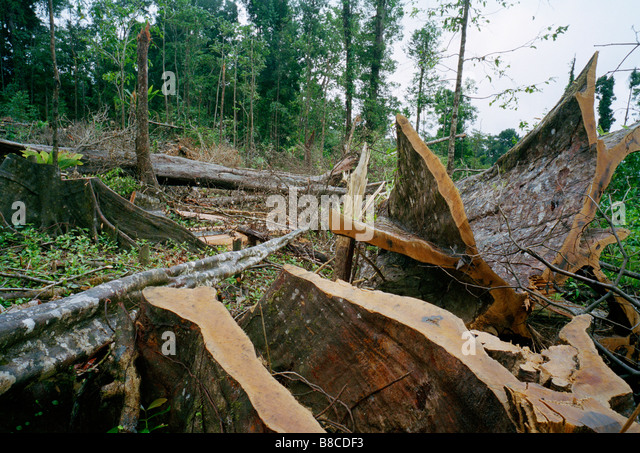 RAINFOREST DESTROYED - Stock Image