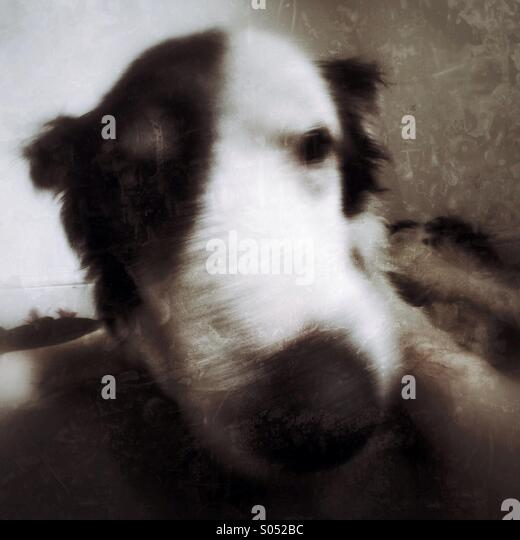 Old dog. - Stock Image