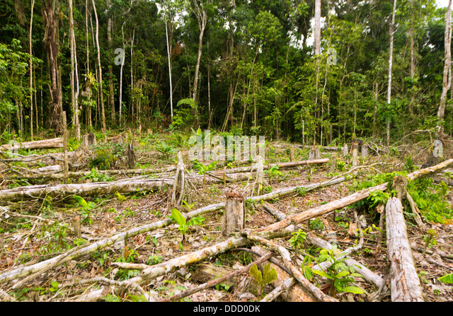 Tropical rainforest cut for agriculture in the Ecuadorian Amazon - Stock Image