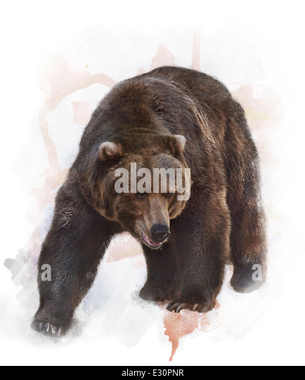Watercolor Digital Painting Of Grizzly Bear - Stock-Bilder