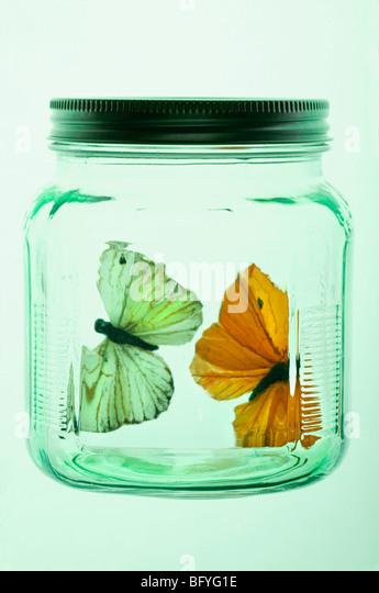 Two butterflies in glass jar - Stock Image