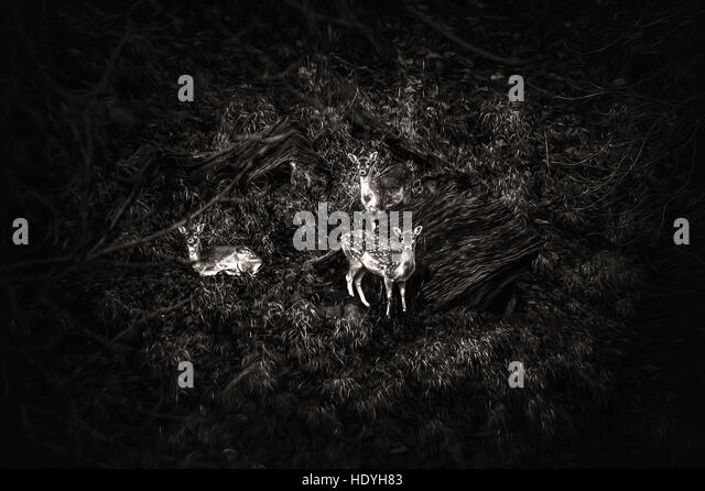 three deers on hill nature - Stock Image
